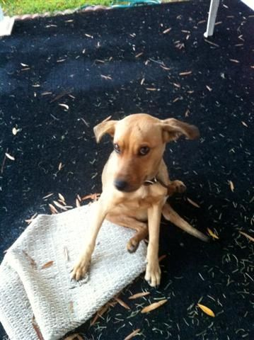 This was Sadie when she was 1st found