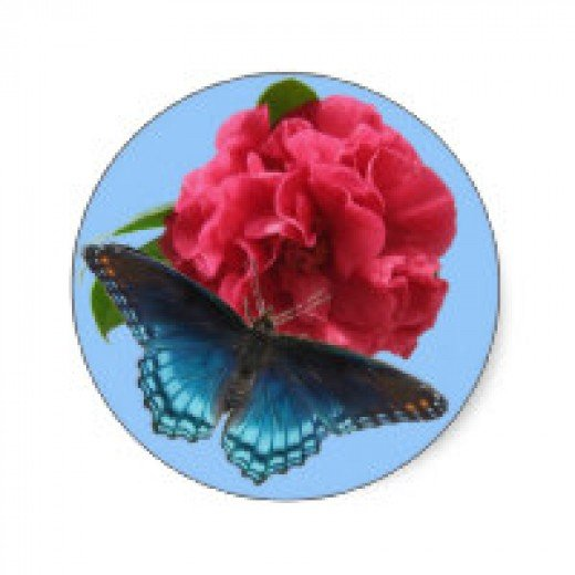 Old-fashioned camellia and red-spotted butterfly in our garden.