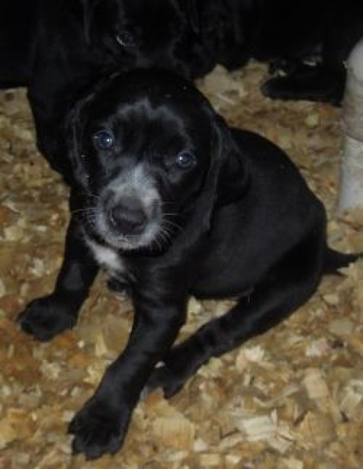 Another of Elsie's Pups
