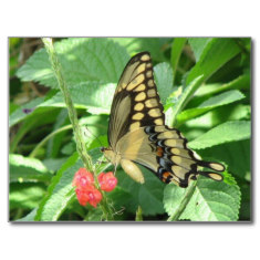 Butterflies are important pollinators.