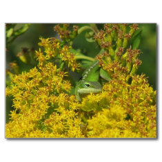Green anoles devour insects in the garden. Native goldenrod attracts many pollinators.