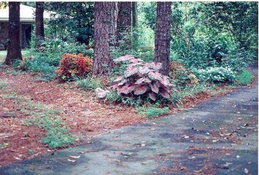 After clearing out the central bed, we planted colorful caladiums and annuals to spruce up the front.