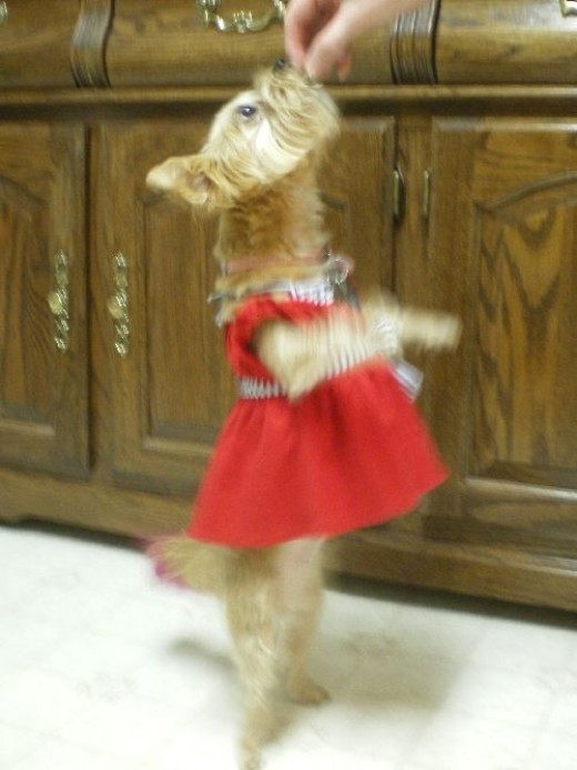 The Diva with the Red Dress on!