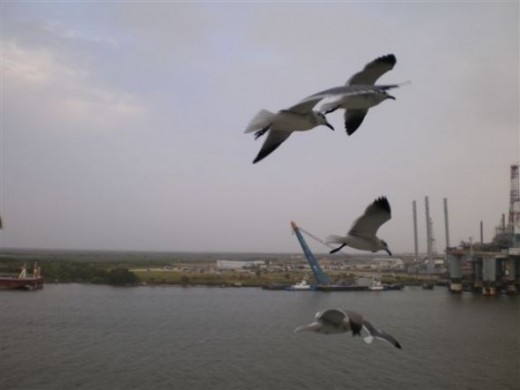 Galveston dock, taken from Royal Caribbean Cruise Ship just prior to departure