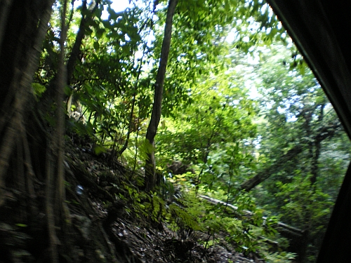 A photo of the rain forest.
