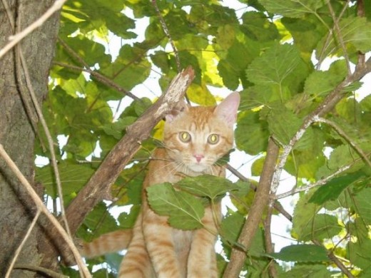 I'm king of the Mulberry tree.