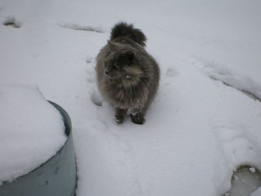 """She's not so fond of snow, Lucky for Magnet, snow is rare """"deep in the heart of Texas"""""""
