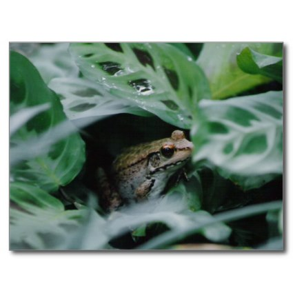 Prayer plants do well around water. The large leaves provide good hiding places for amphibians.