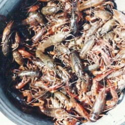 Louisiana Seafood Diet