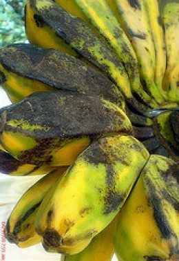 Ripe Plantain Bananas [Photo courtesy by Lulot Ruiz (slowly adopting the local habits) from Flickr]