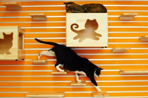 CatsWallDesign Modular Climbing Wall