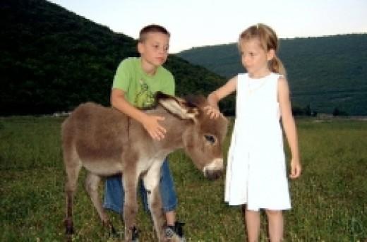 Liburna donkey reserve