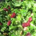 Sweet and Tangy, Crunchy and Chewy Kale Salad: Recipe and Types of Kale