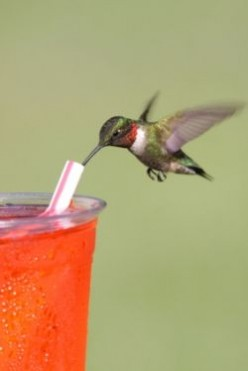 How to Make Hummingbird Food - An Easy Nectar Recipe