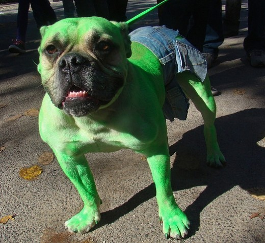 Green Hulk Dog