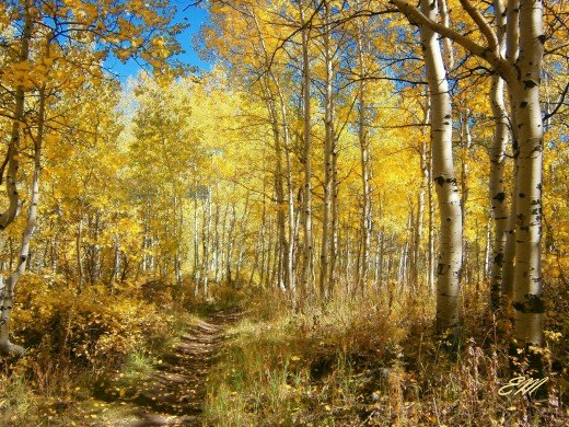 Hiking through a trail of gold.  Shot taken in Wasatch Mountains through the Alpine Loop, Utah - October 2012