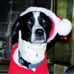 Dog Gift Guide by Rio and Friends