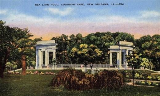 Audubon Sea Lion Pool Postcard