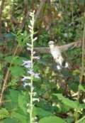 Quiz: Hummingbird and Butterfly Plants
