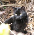 Black Cat Story