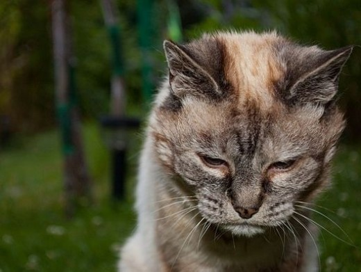 Twenty Year Old Cat - Ready for a Snooze - photographed by Dimitri Torterat