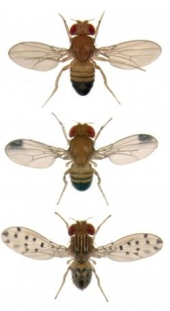 What You Must Know About Fruit Flies....