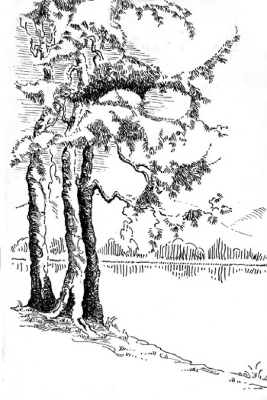 Tree illustration for The Hills - A poem by Olive Whistler of Forest Vale Camp