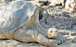 Oldest Turtle in the World: LONESOME GEORGE