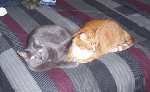 Athena and Jasmine