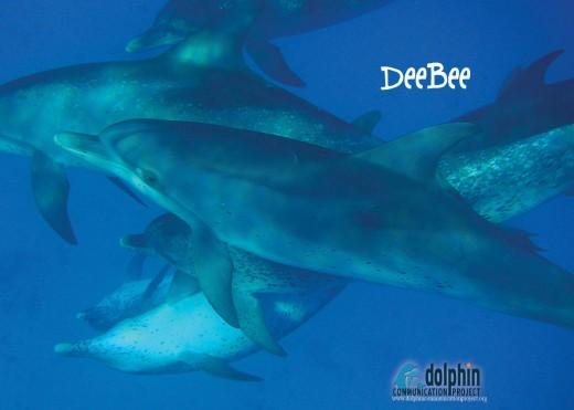 DeeBee!
