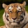 Pipa-bipa profile image