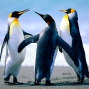 PenguinGirl111 profile image