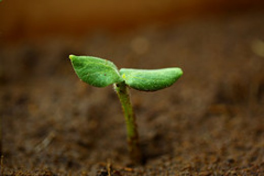 great soil with pumpkin seedling by D Sharon Pruitt aka Pink Sherbet Photography on Flickr.com
