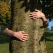 Tree2mydoor profile image