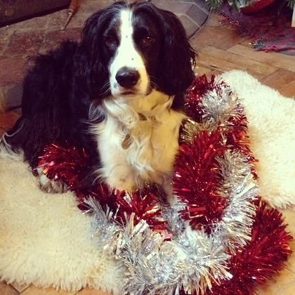 This is me at Christmas helping to decorate the tree!