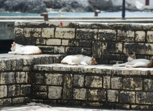 Even the local pets get a chance to siesta in the relaxing surroundings.