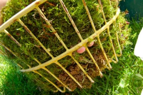 Use small pieces of moss to fill any gaps or weak spots.