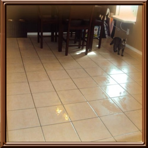 Here is My Kitchen Floor after using the Hoover Max Extract 77- I just did a quick clean, less than 5 minutes.  See? The cat is fine!