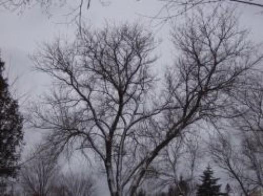 WinterToSpringPoem3