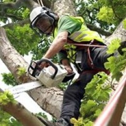 Working up a tree doing some tree pruning.Safety is very important of course.