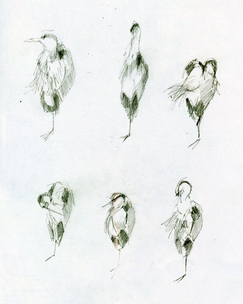 """""""Bert takes grooming very seriously""""  © Katherine Tyrrell - six pencil sketches of a heron having a serious grooming session (drawn from life) at my local ecology pond"""