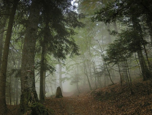 A forest in the Pyrenees
