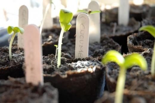 Spring Dreaming Vegetables