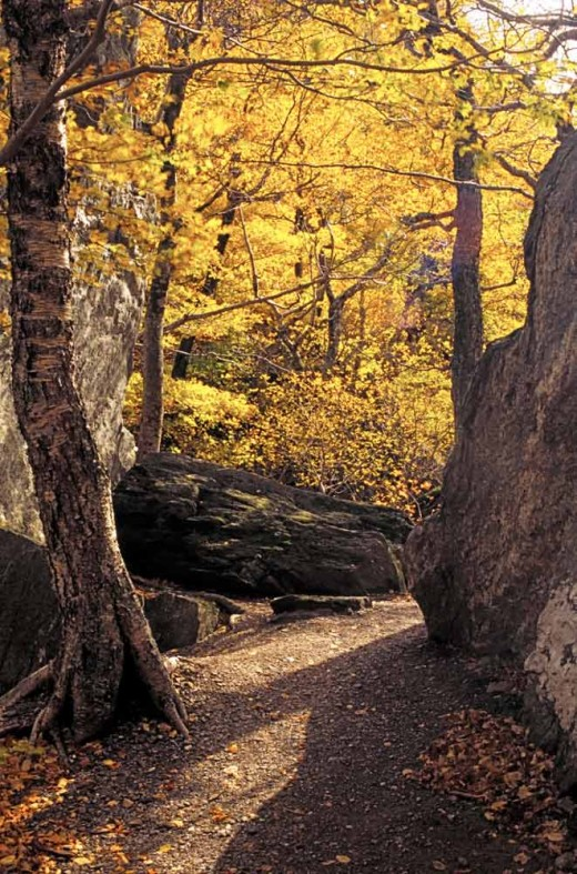 Light and fall colours, Stowe, Vemont, USA
