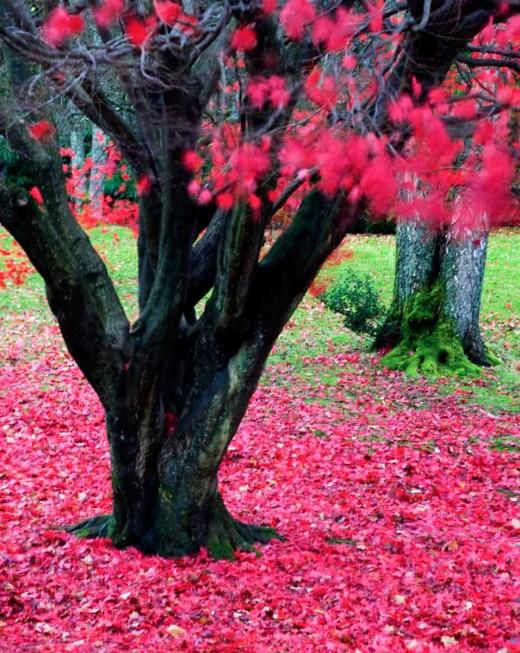 Autumn (Fall) English Lake District.