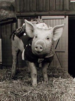 Arnold Ziffle - The know-it-all pig.