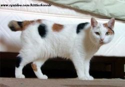 to cats cat pictures types of cats cats musical cats information funny cats cat breeds kittens cat behaviour