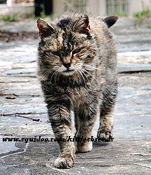 feral cat feral cat dps tame a feral cat feral rabbit feral cat content feral cat trap definition feral cat domesticate feral cat catch feral cat