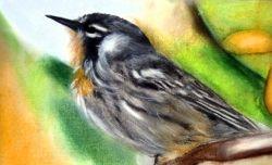 Little Bird Pastel Painting