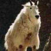 Einar A profile image